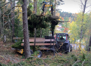 Hämtning med traktor vid trädfällning